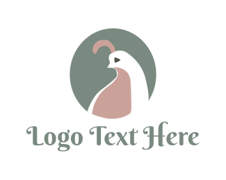 Dove - White Dove logo design
