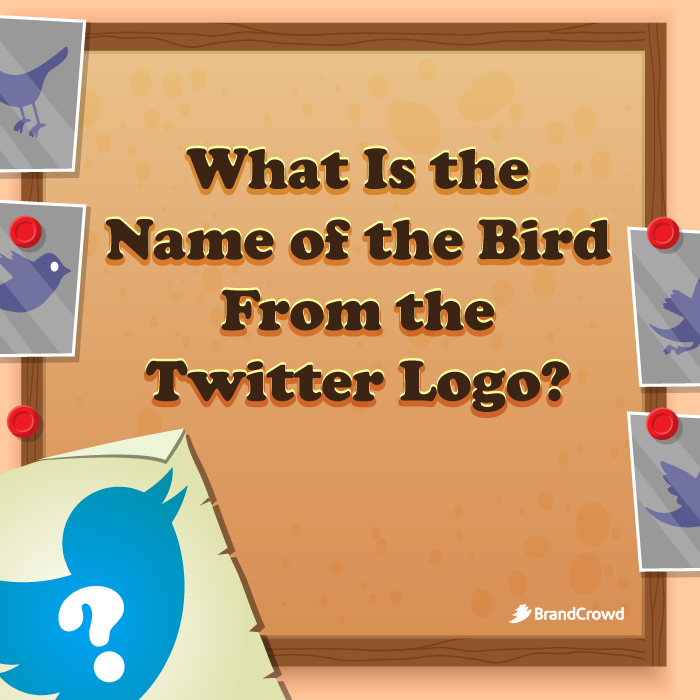 section-image-of-what-is-the-name-of-the-bird-from-the-twitter-logo